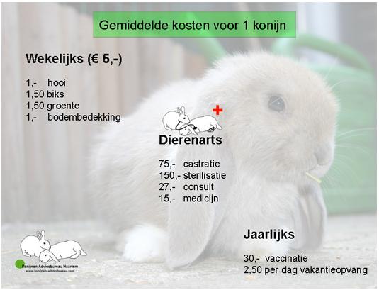 kosten konijn