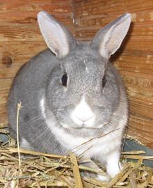 Dating konijnen